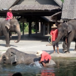 Elephant_Show