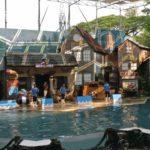 d_Sea Lion Show