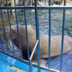 g_I am a walrus