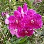 h_Orchideenfarm_15.1.20