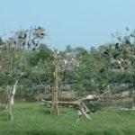 j_Safari Park