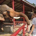 t_Elefantenstation2