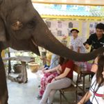 t_Elefantenstation3