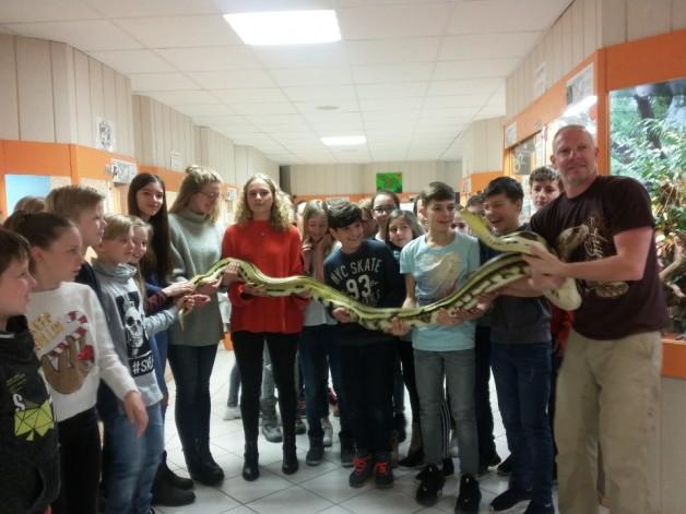 Schlangen und Echsen live erleben