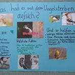 Fünftklässler bauen Ganzjahresfutterstationen für Vögel